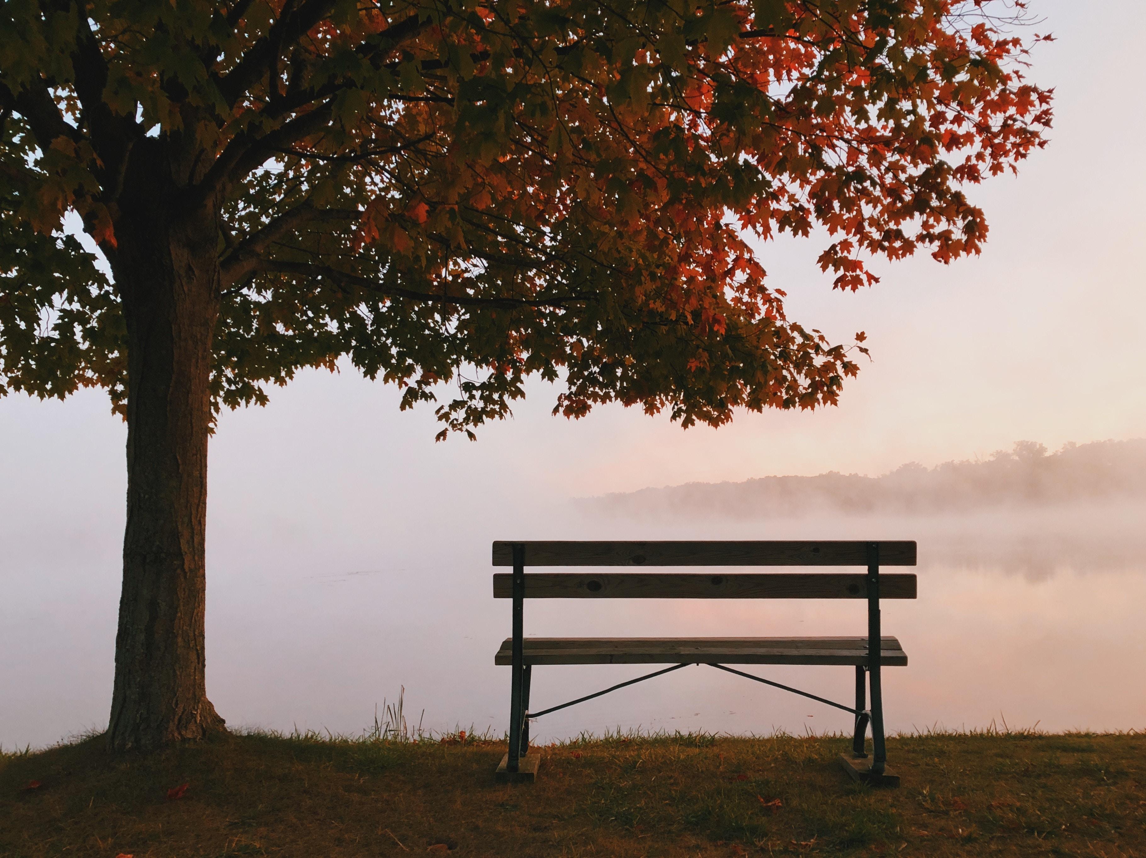 Studio Campanella - Panchina sotto un albero